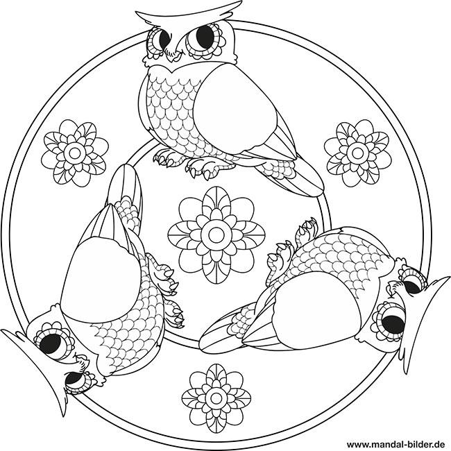 Mandala Eule Malvorlage Für Kinder Zum Ausmalen